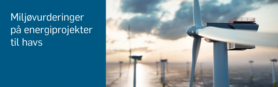 Environmental Assessment in Offshore Wind, havvind, vindenergi, energiøer