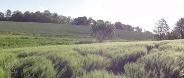 Vådområde, Atkins